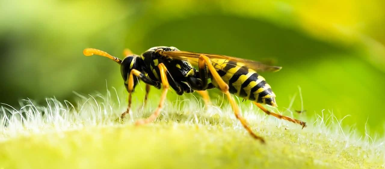 Sterben Bienen Wenn Sie Stechen